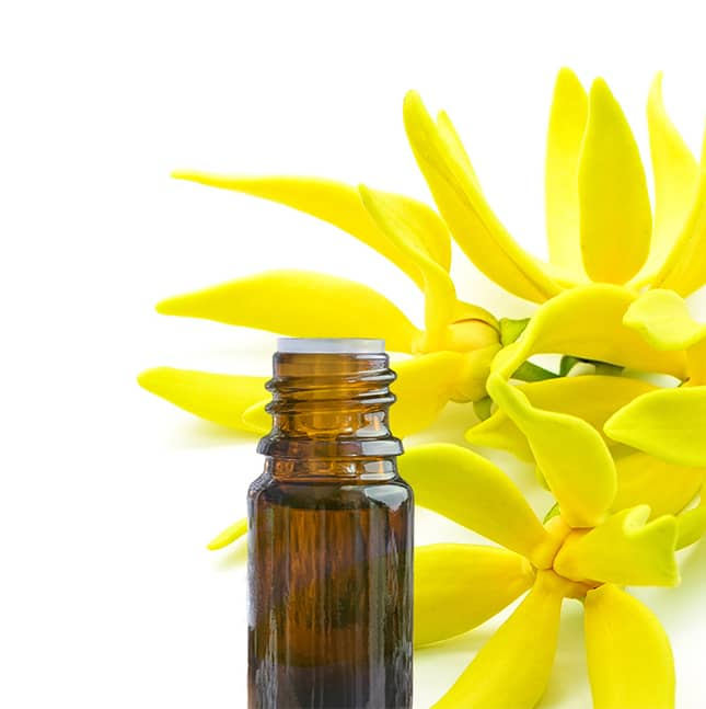 huile essentielle d'ylang-ylang